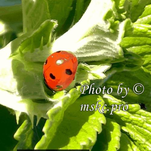 Как сделать красивую надпись на фото: https://mskc.pro/nadpis-na-foto/